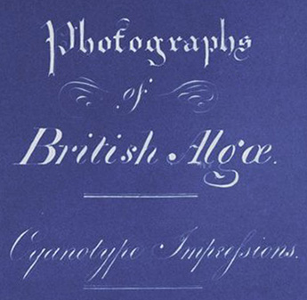 Photographs of British Algae: Cyanotype Impressions / The New York Public Library www.nypl.org
