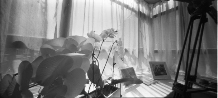 "Olga Lua, ""Orchids""  Xi'an, Shaanxi, China   圖/http://pinholeday.org/gallery"